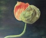 poppy (oil 50cm x 40 cm)