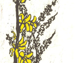 Fortune Forsythia