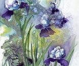 Iris Iridescence