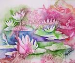Lily Pond Hues