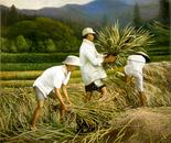 Harvest Time (Musim Panen)