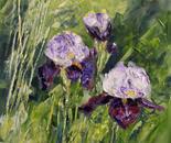 Lonely irises
