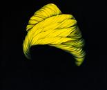 The yellow headscarf