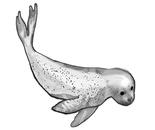 Hybrid Seal study