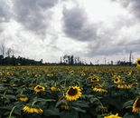 field of hope