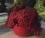 organic rojo