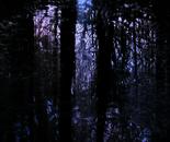 Nature Mysticism 2