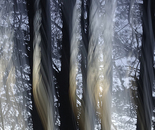 Nature Mysticism 3