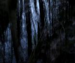 Nature Mysticism 5