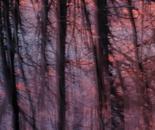 Nature Mysticism 6