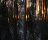 Nature Mysticism 8