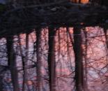 Nature Mysticism 12