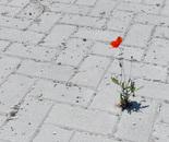 Life-Concrete 1-0