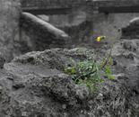 L.W.A.W. (Pompeii)