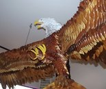 wooden eagle 10  ft .