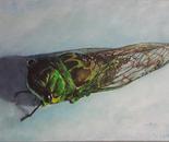 Cicada #2