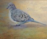 Mourning Dove Resurrection