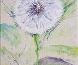 Dandelion Seed Head, Taraxacum
