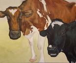 Patrick Family Cows, Ayrshire & Holstein