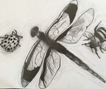 Study of insects