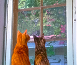 Morning Butterfly Watch