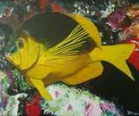 shy hamlet fish