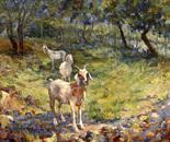 """Mountain goats"""