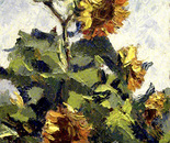 """""""Sunflowers in the wind"""""""