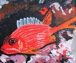 longspine squirel fish