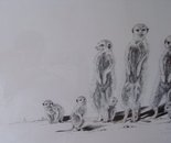 Family of Meercats