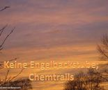 chemtails not angels bakery
