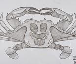 Scratch Technique Crab