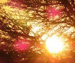 Orly Aviv - Sunshine  4