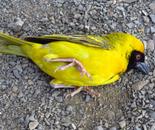 Orly Aviv - Read my Yellow.1