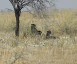 Orly Aviv - African Desert Wildlife 6