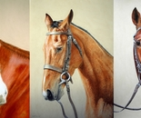 Three racehorse commissions
