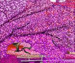 Purple Woods 2015
