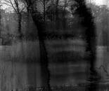 étang sombre