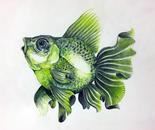 gueenfish