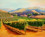 Glorious Morning -California  Wine country