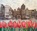 Tulip amsterdam