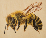 Bee VIII (Melina)