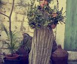 Olive tree Woman I