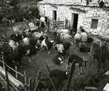 Pastori di capre