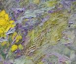 Textures of herbs-2