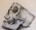 No headed skull
