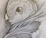 Owl leaf