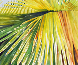 A Symphony in the Palms #1