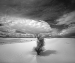 Yucca Trees and Dunes, White Sands