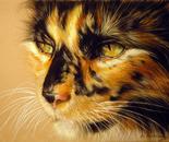 TORTOISESHELL CAT American Art Awards Winner 2015